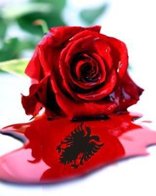 FOTO TË MUAJIT MAJ - Faqe 2 Trendafili_shqiponja